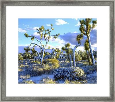 Usa, California, Joshua Tree National Framed Print