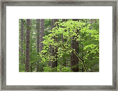 Usa, Oregon, Columbia River Gorge Framed Print