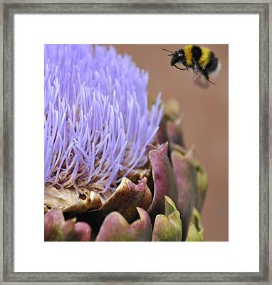Soft Landing Framed Print by Dave Byrne