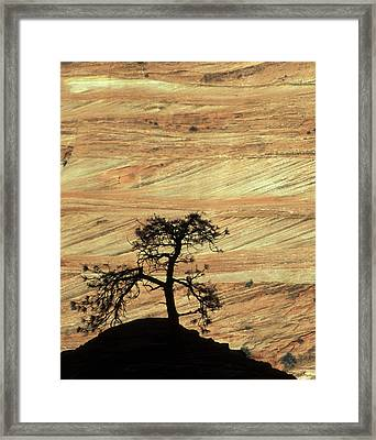 Usa, Utah, Zion National Park Framed Print by Jaynes Gallery