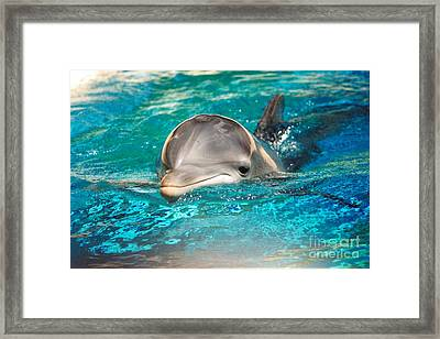#285 Dolphin Keep Smiling Sunny Happy Photography Framed Print by Robin Lee Mccarthy Photography