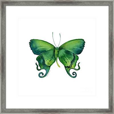 29 Arcas Butterfly Framed Print by Amy Kirkpatrick