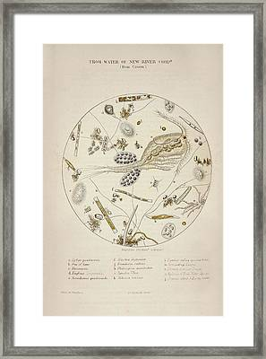 Cholera Epidemic Research Framed Print by British Library