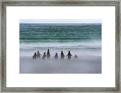 Falkland Islands Framed Print by Inger Hogstrom