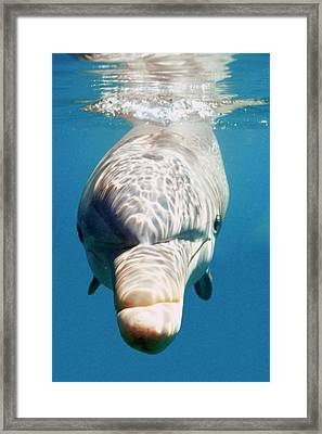 Oceans Framed Print by Andre Seale