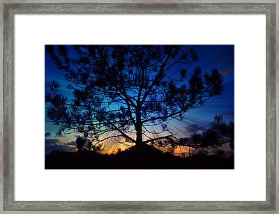 2nd Day Of Christmas Framed Print by Sharon Soberon