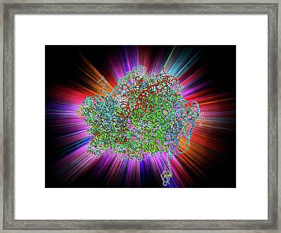 70s Ribosome Framed Print by Laguna Design