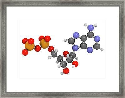 Adenosine Diphosphate Molecule Framed Print