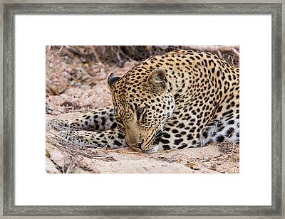 Africa, South Africa, Ngala Private Framed Print