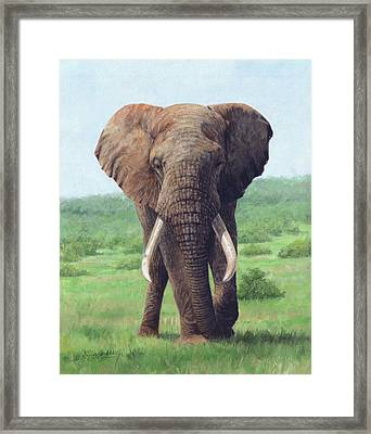 African Elephant Framed Print by David Stribbling