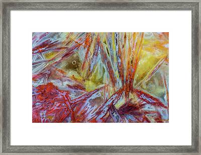 Agate In Colorful Design, Sammamish Framed Print by Darrell Gulin