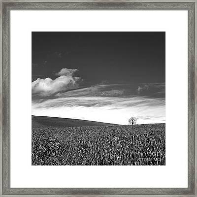 Agricultural Landscape Framed Print