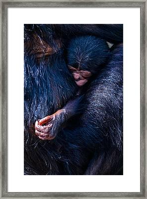 Akimbo Framed Print by Brian Stevens