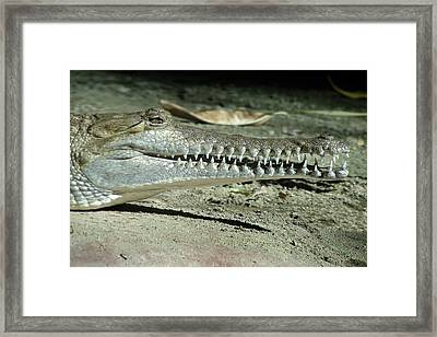 Alligator Camouflage Framed Print