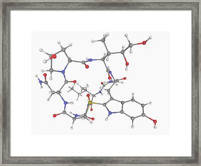 Alpha-amanitin Toxin Molecule Framed Print by Laguna Design/science Photo Library