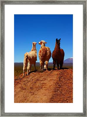 3 Amigos Framed Print by FireFlux Studios