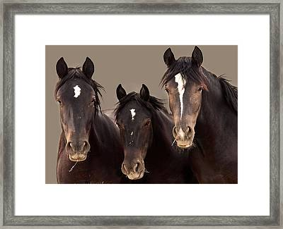 3 Amigos Sepia Wild Mustang Framed Print by Rich Franco