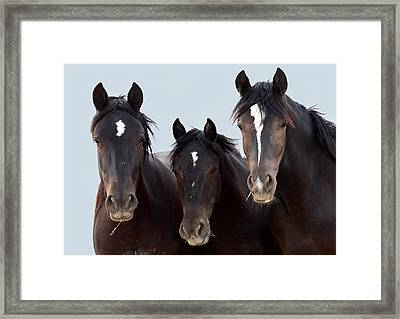 3 Amigos Wild Mustang Framed Print