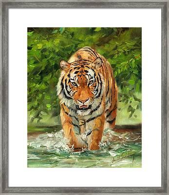 Amur Tiger Painting Framed Print by David Stribbling