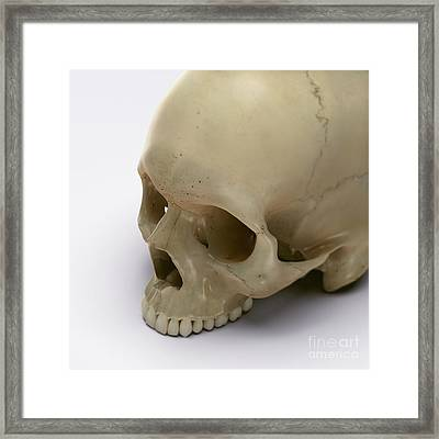 Anatomy Of The Skull Framed Print by Science Picture Co