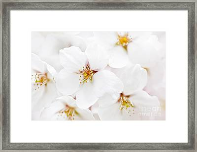 Apple Blossoms Framed Print by Elena Elisseeva