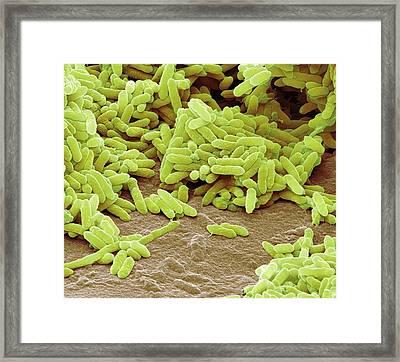 Aquaspirillum Bacteria Framed Print