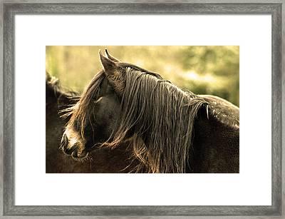 Arabian Horse Framed Print by Tommytechno Sweden