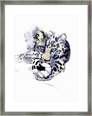 Arabian Leopard Framed Print by Mark Adlington