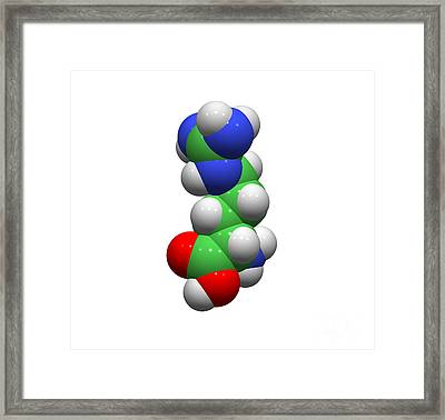 Arginine Molecule Framed Print