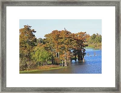 Atchafalaya Basin In Louisiana Framed Print