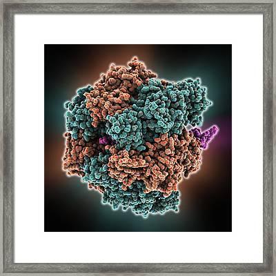 Atpase Molecule Framed Print
