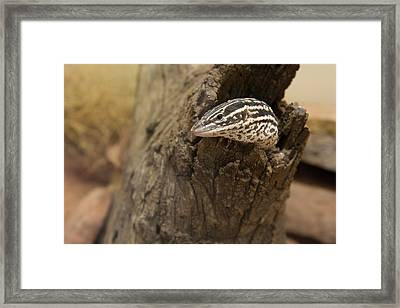 Australia, Alice Springs Framed Print by Cindy Miller Hopkins