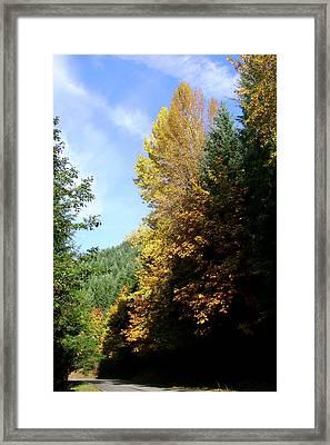 Autumn 2 Framed Print by J D Owen