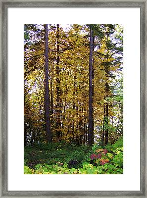 Autumn 5 Framed Print by J D Owen