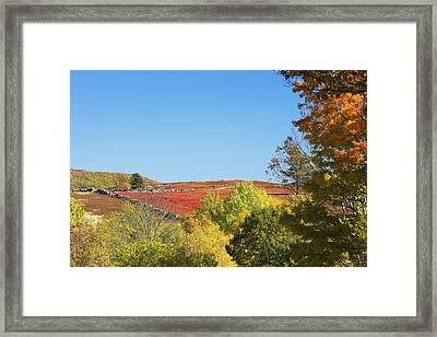 Autumn Colors In Maine Blueberry Field And Forest Framed Print