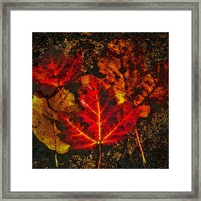 Autumn Leaves Framed Print by David Patterson