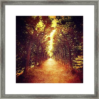 Avenue Trees Framed Print