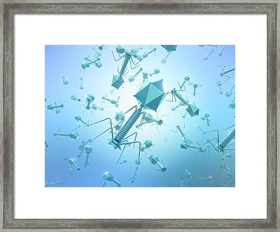 Bacteriophage T4 Viruses Framed Print