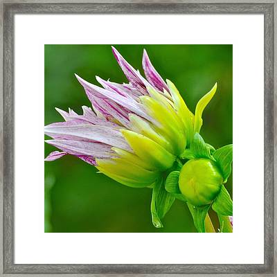 Beautiful Morning Beautiful Day Framed Print