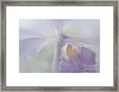 Beauty In A Whisper Framed Print