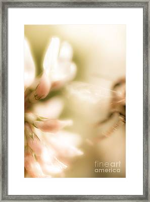Bee Gone Framed Print