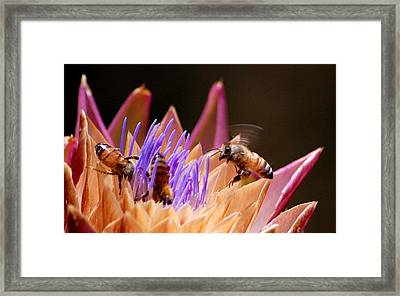 Framed Print featuring the photograph Bees In The Artichoke by AJ  Schibig