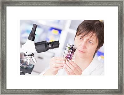Biological Research Framed Print