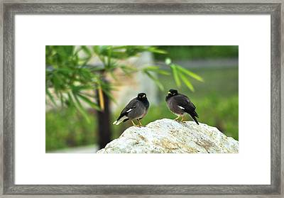 Birds Framed Print by Anusha Hewage