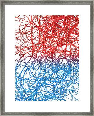 Blood Vessels Framed Print