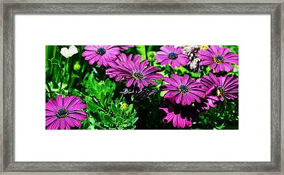 Blooms In Bloom Framed Print by JAMART Photography