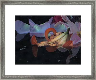 Blossom Rain 4 Framed Print by Georg Kickinger