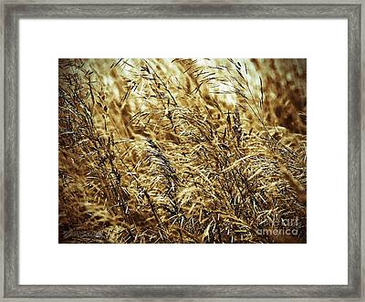Brome Grass In The Hay Field Framed Print by J McCombie