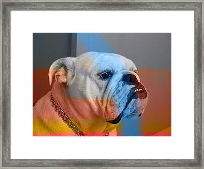 Bulldog  Framed Print by Marvin Blaine