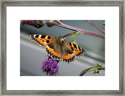 Butterfly Radar Tagging Framed Print by Louise Murray